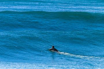 Surfing Surfer Wave Swells