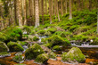 canvas print picture - Bach im Harz Nationalpark