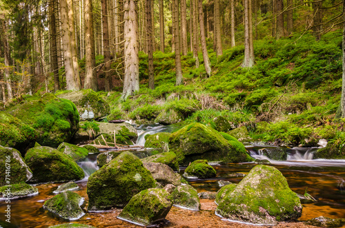 canvas print picture Bach im Harz Nationalpark