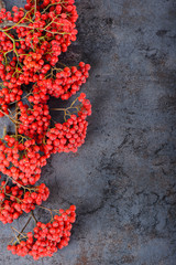 Bunch of red rowan berries