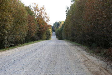 Country road in a wood