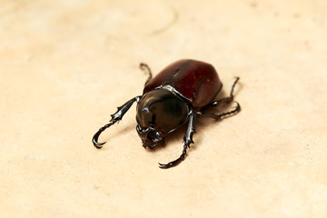 beetle on cement floor background