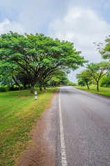 Beautiful road with nature scene