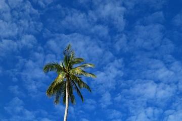 Coconut Tree & Blue Sky