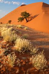Desert landscape, Sossusvlei