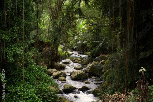 Foto op Plexiglas Indonesië River at Gunung Kawi temple in Bali