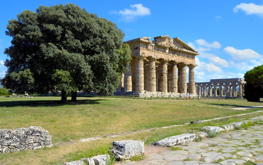 Stately oak trees juxtaposed imposing temple of Neptune, Paestum