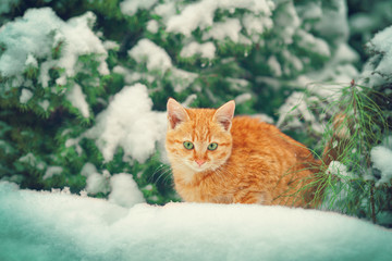 Cat in snowy forest