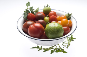 Verschiedene Tomatensorten in Schüssel