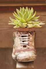 succulent plant in the vase
