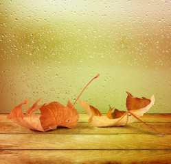 Dried autumn leaves lying on the background of the rainy window