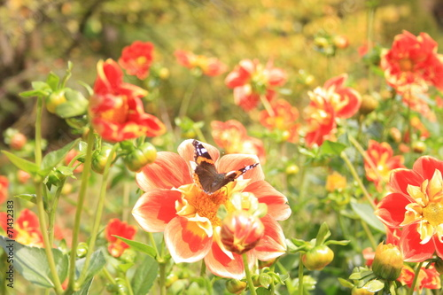 canvas print picture Blumenmeer