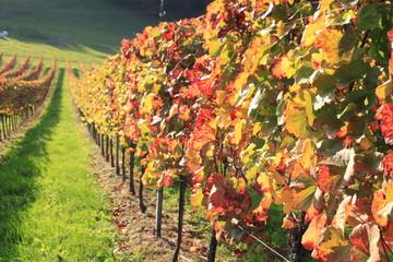 Weingarten 1