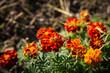 canvas print picture - Wunderschöne Blume