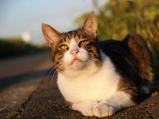 大きい耳の猫