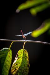 blue dragonfly sitting on tree
