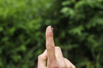 Human finger