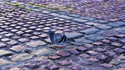 City pigeons in autumn