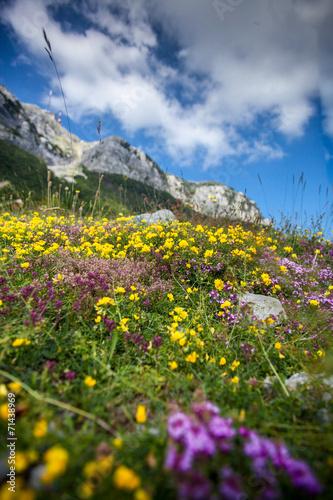 Keuken foto achterwand Nieuw Zeeland landscape of flower filed on the piedmont of Lovcen mountain