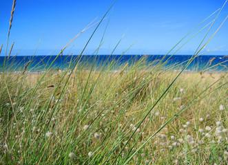 herb and ocean