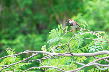 Natural background. Sparrow sitting on a branch of rowan