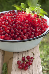 Red currant berries in a large bowl on the bench, and a bunch of
