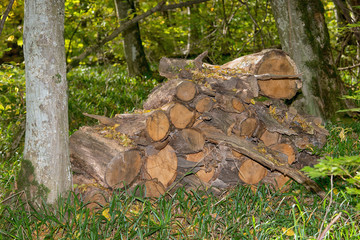Harvested wood in the forest