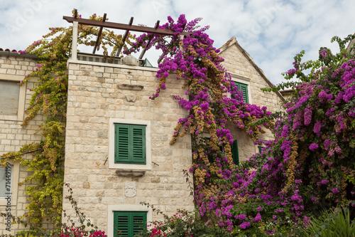 canvas print picture Fleurs grimpantes à Split