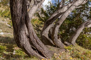 Tronc d'arbre,fendu