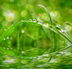 Water drops on grass with Sparkle.