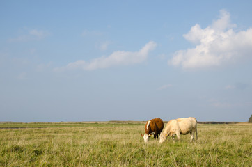 Idyllic view at a pastureland with grazing cows
