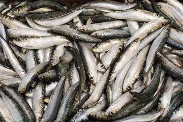 Poissons sardines