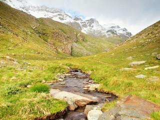 Stream in fresh green Alps meadow, snowy peaks of Alps