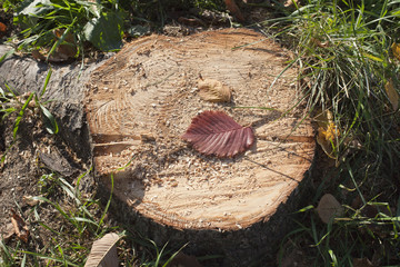 Brown stump on green grass