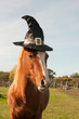 Pony dressed for Halloween - 71453940