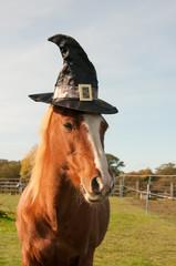 Pony dressed for Halloween