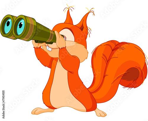 Squirrel observer - 71454101
