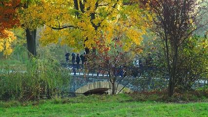 Bridge in the autumn park