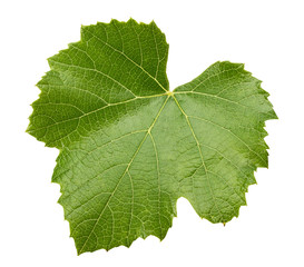 grape leave isolated on the white background