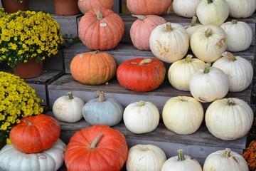 Pumpkins!-Pumpkins!-Pumpkin Stand!-2