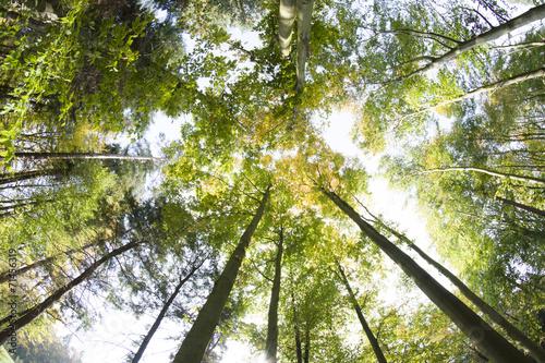 korony-drzew-jesien