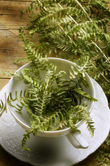 Pteridophyta Pteridophyte シダ植物門 Felce نباتات لازهرية وعائية