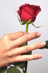 la rose offrir