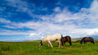 Obrazy na płótnie, fototapety, zdjęcia, fotoobrazy drukowane : Horse