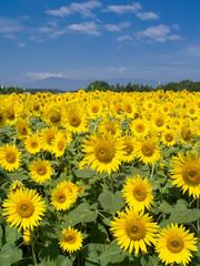 盛夏の花畑