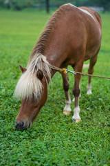 馬のポートレート