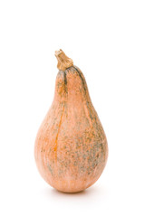 ripe pumpkin stands up on a white background