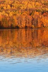 Fall trees in New Brunswick Canada