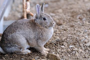 ウサギのポートレート