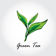 green tea background.